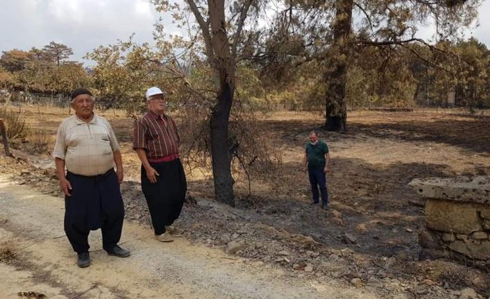 Alanya'nın yangın bölgesinde zarar tespiti sürüyor