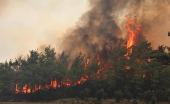 Bakandan Gündoğmuş ve Manavgat yangınıyla ilgili flaş açıklama