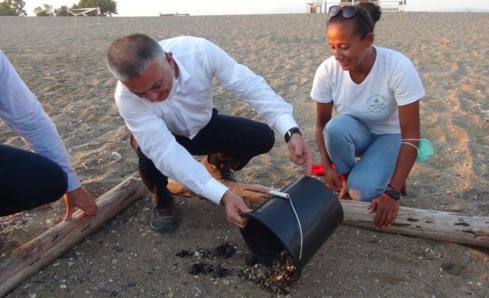 Deniz Kaplumbağaları Vali Yazıcı'nın elleriyle denizle buluştu