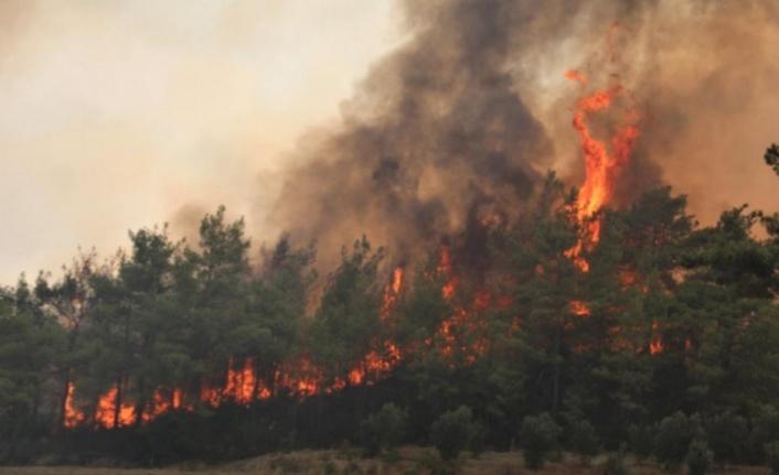 İşte Alanya'daki yangınların bilançosu