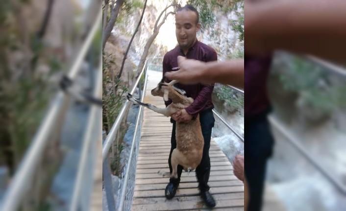 Alanya'da kurtarmaya çalıştığı dağ keçisi ile birlikte gölete düştü