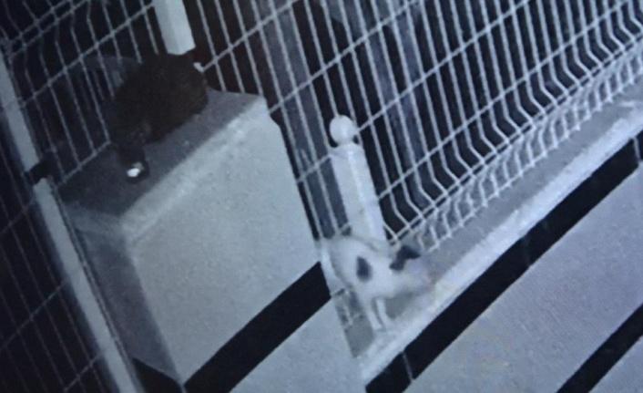 Ayağı bahçe teline sıkışan yavru kedi 9 saat boyunca kurtarılmayı bekledi