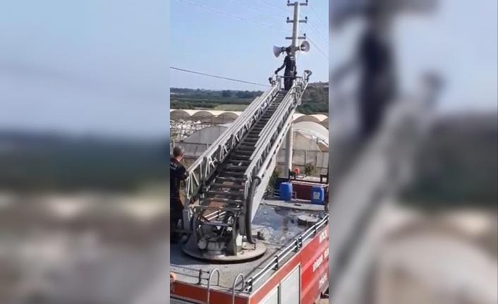 Elektrik teline takılan serçeyi itfaiye ekipleri kurtardı