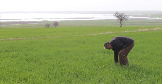 Beyşehir Gölü Kıyısındaki Ürünler Zarar Gördü