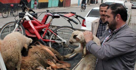 Çaldıkları Koyunları Satamadan Yakalandılar