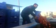 Çiftçiler domateslerini çöpe dökmek için sıraya girdi