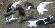 Alanya#039;da 25 kedi katledildi