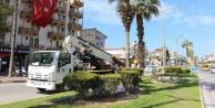 Büyükşehir'den palmiye temizliği