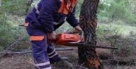 Kestiği ağacın altında kalan kişi öldü