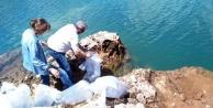 Oymapınar#039;a 50 bin yavru sazan balığı salındı