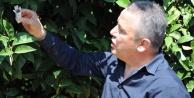 Zararlı böceklerle ilginç mücadele yöntemi