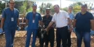 Alanya İlçe Tarım Kurban Bayramı#039;na hazır