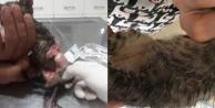 Vahşet: Yavru kedinin derisini yüzdüler