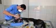 Yaralı köpek hayata döndürüldü