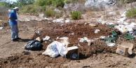 Büyükşehir Alanya#039;da kara sineklere savaş açtı