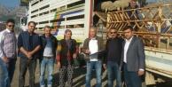 Genç üreticilere bin 260 dişi koyun teslim edildi