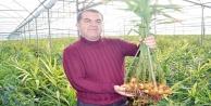 Türkiye#039;nin ilk zencefil üretimini yaptı