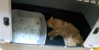 Antalya#039;da yaralı kediye yardım eli