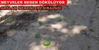 Arslan#039;dan meyve dökümü uyarısı