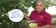 İncirlerinden kimse yemeyince bahçesine tabela astı