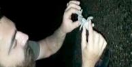 Yolunu kaybeden yavru caretta carettalara yardım eli