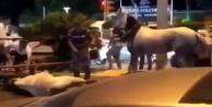 Alanya#039;da eziyet edilen at öldü mü?