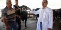 Alanya#039;da kurbanlık satışı başladı