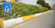 Alanya Belediyesi#039;nden caddelere bakım