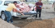 350 kilo kaçak et  Alanya#039;ya getiriliyordu