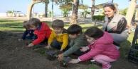 Kelebek sınıfı kendi çiçeklerini dikti
