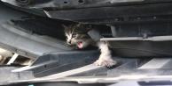 Oto tamircisinde kedi kurtarma seferberliği