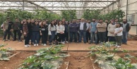 Üniversite öğrencileri tohum çeşitlerini inceledi