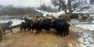 Alanyanın kırsalında karda mahsur kalan çobanlar kurtarıldı
