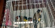 Saka ve Florya kuşları doğaya salındı