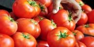 Yıllık domates ihracatında önemli karar