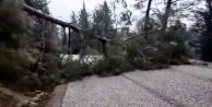 Şiddetli fırtına ağacı kökledi!