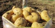 Tezgahlar ithal patatesle dolacak