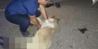 Otomobilin çarptığı köpeğe kalp masajı