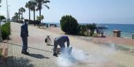 Alanya#039;da sinekle mücadele hız kesmiyor