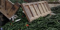 Alanyalı üretici 13 kamyon salatalığı çöpe döktü