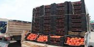Antalya Halinde domates 1 liraya kadar düştü