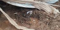 Antalyada selde 10 küçükbaş hayvan telef oldu