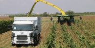 Antalya#039;da sılajlık mısırın tonu 200 TL
