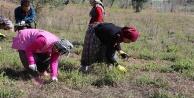 Antalya'da tarla temizliği kavgası: 2 yaralı