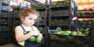 Alanya#039;dan Ukrayna#039;ya 3.5 ton avokado