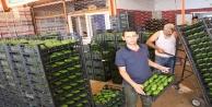 Alanyadan Polonyaya ilk kez avokado ihracatı başladı