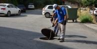 Büyükşehir Alanya#039;da sinek avında