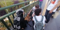 Vicdansız sürücünün çarpıp kaçtığı köpeğe  gençler sahip çıktı
