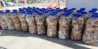 Yok böyle bir koleksiyon, 52 şişede 15 bin izmarit
