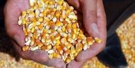 TMO mısır satış fiyatını açıkladı